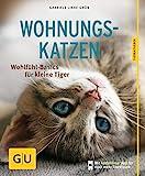 Wohnungskatzen: Wohlfühl-Basics für kleine Tiger