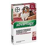 Advantage 250 für Hunde Lösung 4 stk