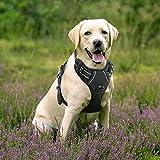 Rabbitgoo No-Pull Hundegeschirr einstellbar weich Hundegeschirr Haustier einfach sicher Kontrolle Körper bequem Hunde Leine für große Hunde Schwarz L