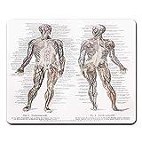 Mauspads Vintage Zeichnung des 19. Jahrhunderts von menschlichen Muskeln und großen Blutgefäßen aus dem Meyers Lexikon-Buch, geschrieben in deutschen...