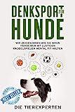 Denksport für Hunde: Wir zeigen Ihnen wie Sie Ihren Vierbeiner mit lustigen Knobelspielen mental fit halten