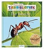 Meine große Tierbibliothek: Die Ameise: Sachbuch für Vorschule & Grundschule