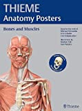 THIEME Anatomy Posters Bones and Muscles, Latin Nomeclature