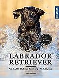 Labrador Retriever: Geschichte, Haltung, Erziehung, Beschäftigung