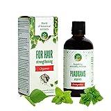Bio Haaröl der Naturkosmetik - 100% reines Öl für sehr geschädigte Haare - natürliche Harpflege um Haarwachstum zu fördern - wirkt gegen Haarausfall für...