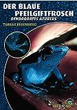 Der Blaue Pfeilgiftfrosch: Denrdobates azureus: Dendrobates azureus (Art für Art: Terraristik)