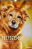 Stefan Heine Hunde-Quiz 2020 - Wochenkalender - Stefan Heine - 23,7x34cm - Quizkalender - Hundekalender
