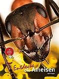 Entdecke die Ameisen (Entdecke die ...: Kindersachbuchreihe)