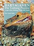 Bartagamen: Die Gattung Pogona - Artgerechte Haltung, Pflege und Zucht (Terrarien-Bibliothek)